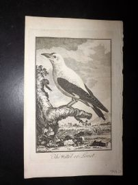 Universal Magazine 1776 Antique Bird Print. The Wittol or Loriot